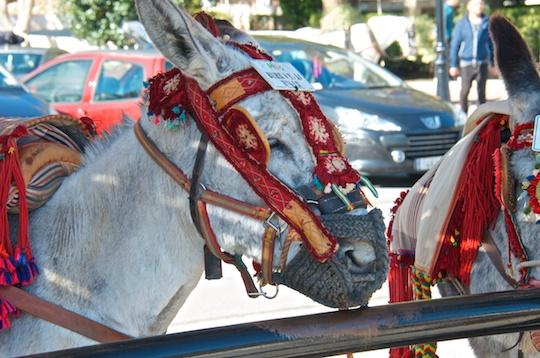 Donkey taxi in Mijas