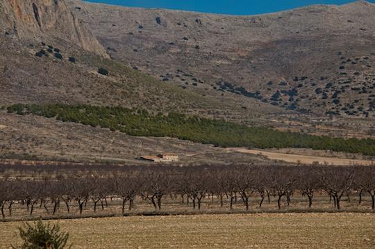 Almond groves, Murcia