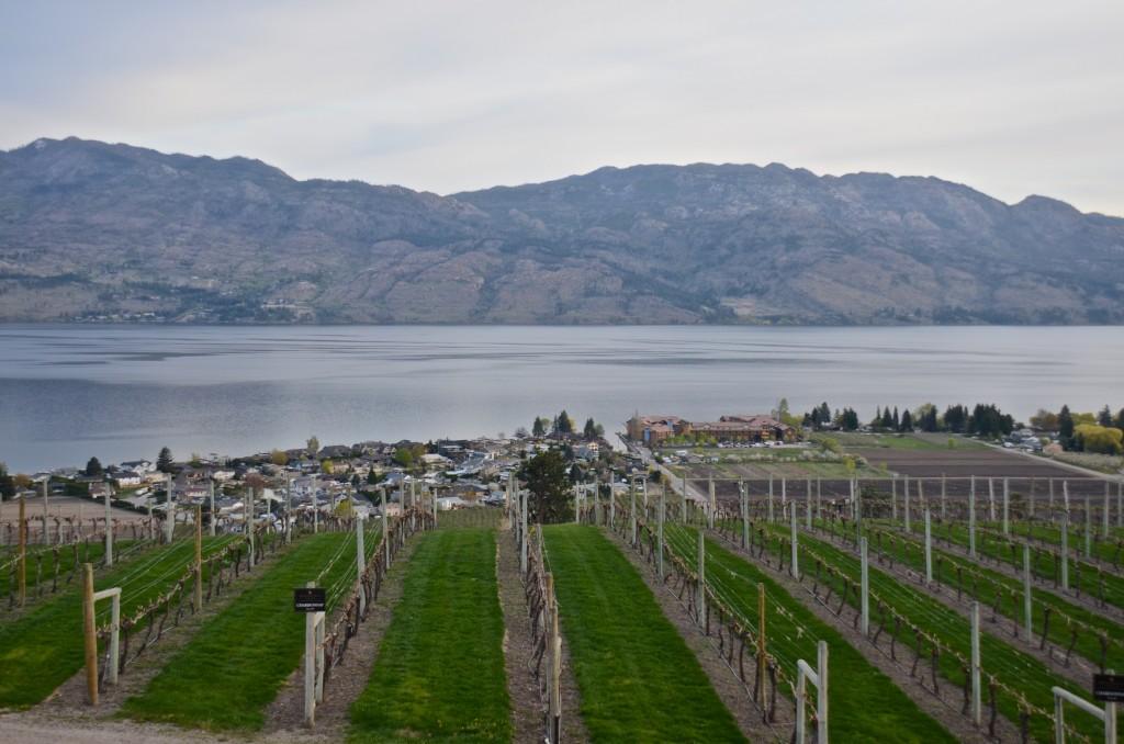 Mission Hills vineyards