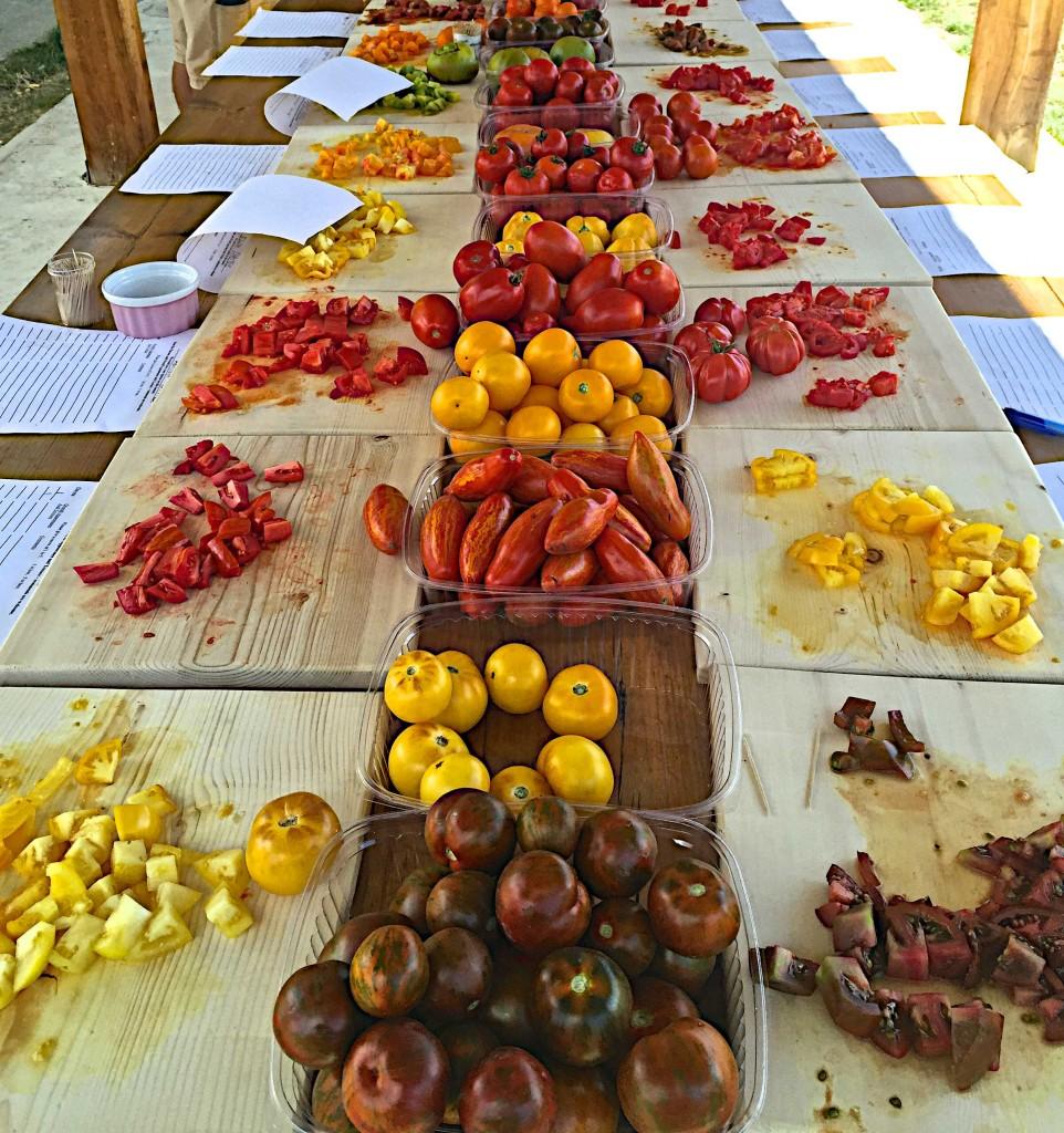 Heirloom tomatoes at Sunshine farm
