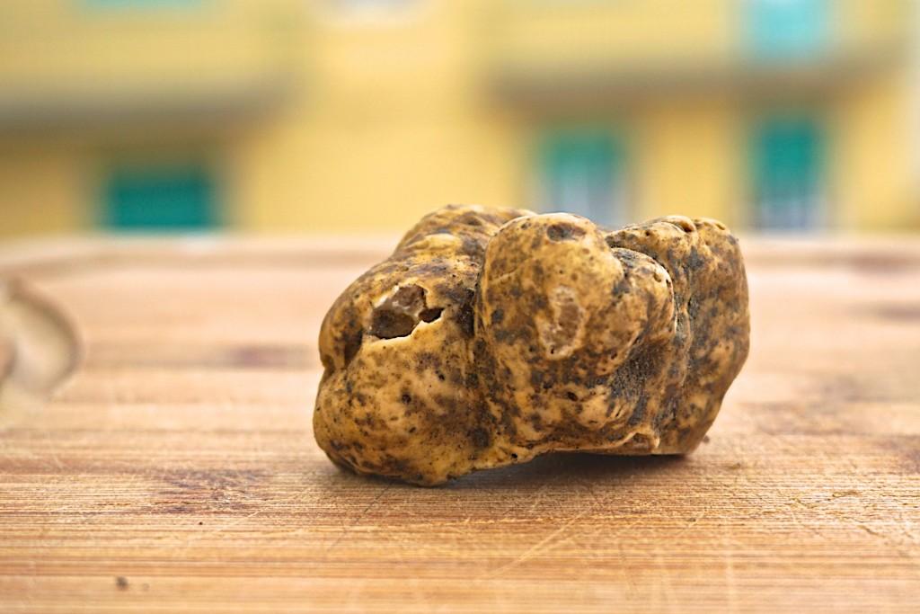 White truffle from San Miniato