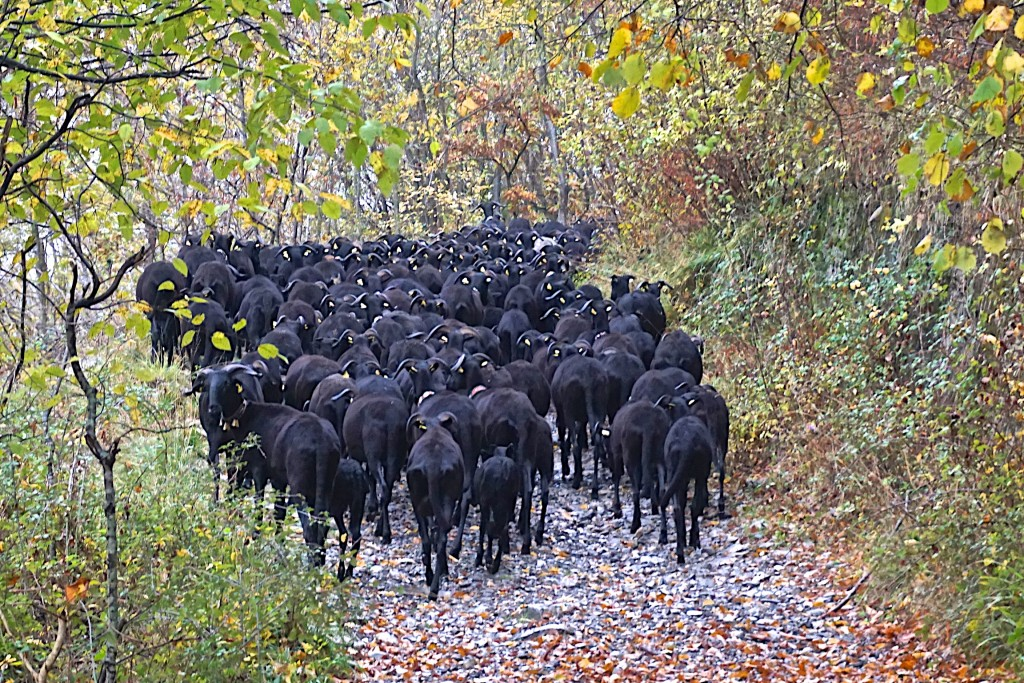 Herding the black sheep up the mountain