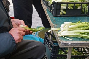 Trimming chicory root
