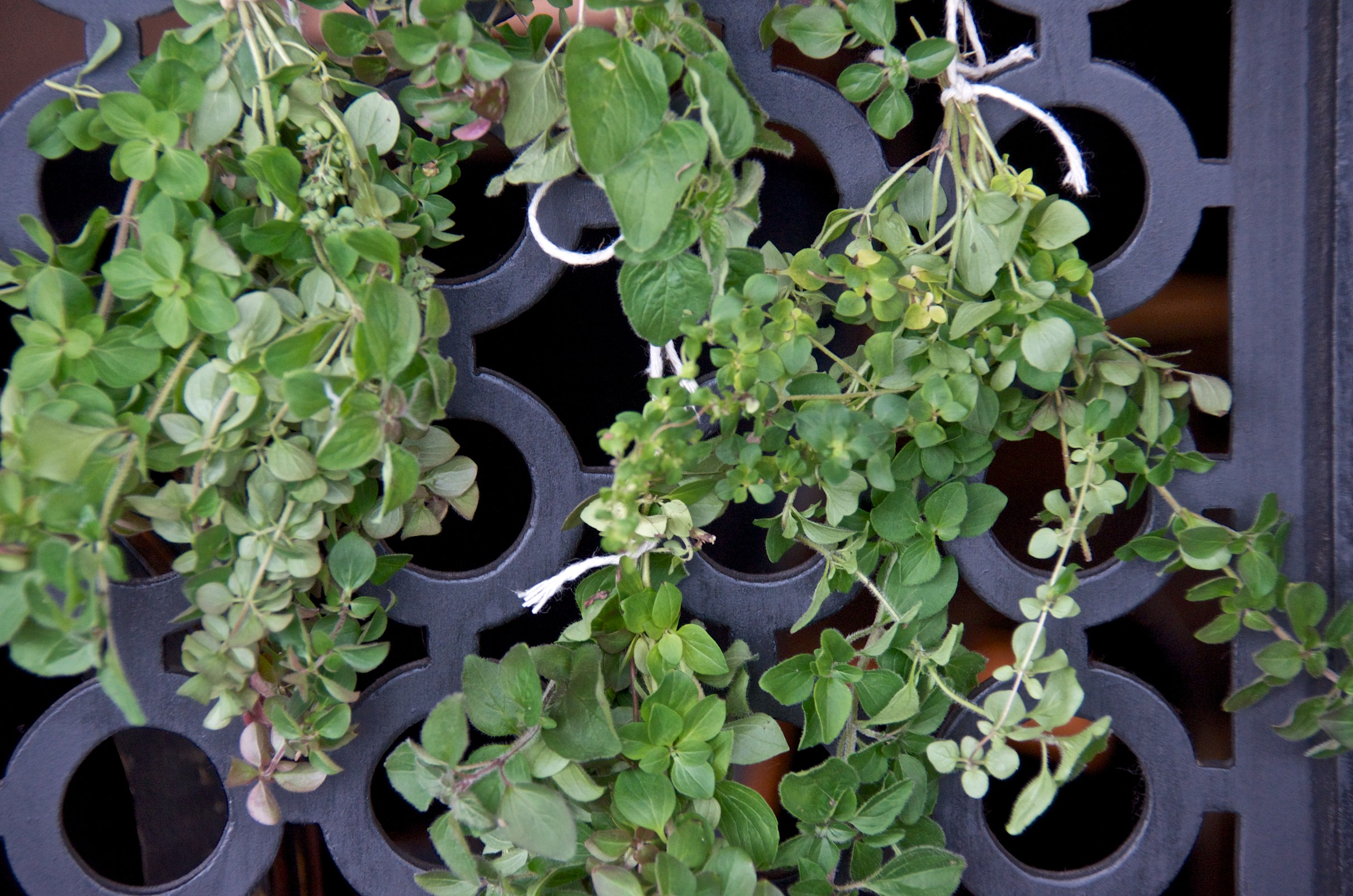 Hang-drying fresh herbs