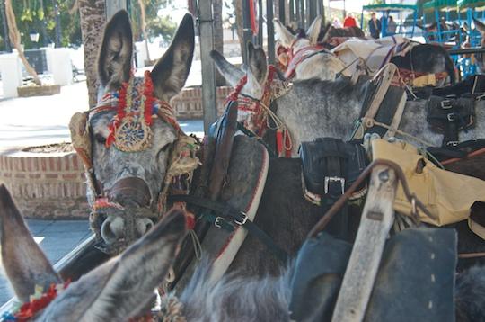 El burro taxi, Mijas