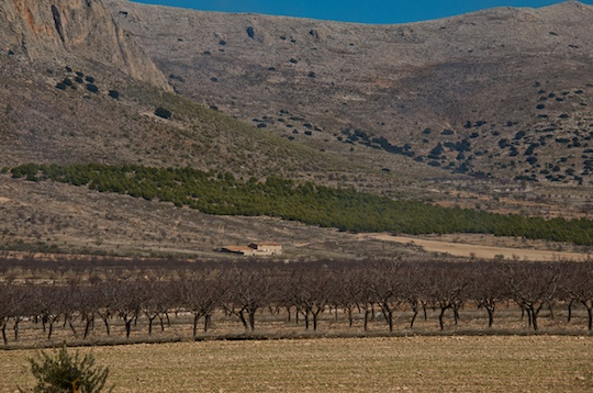 Almond groves, Murcia