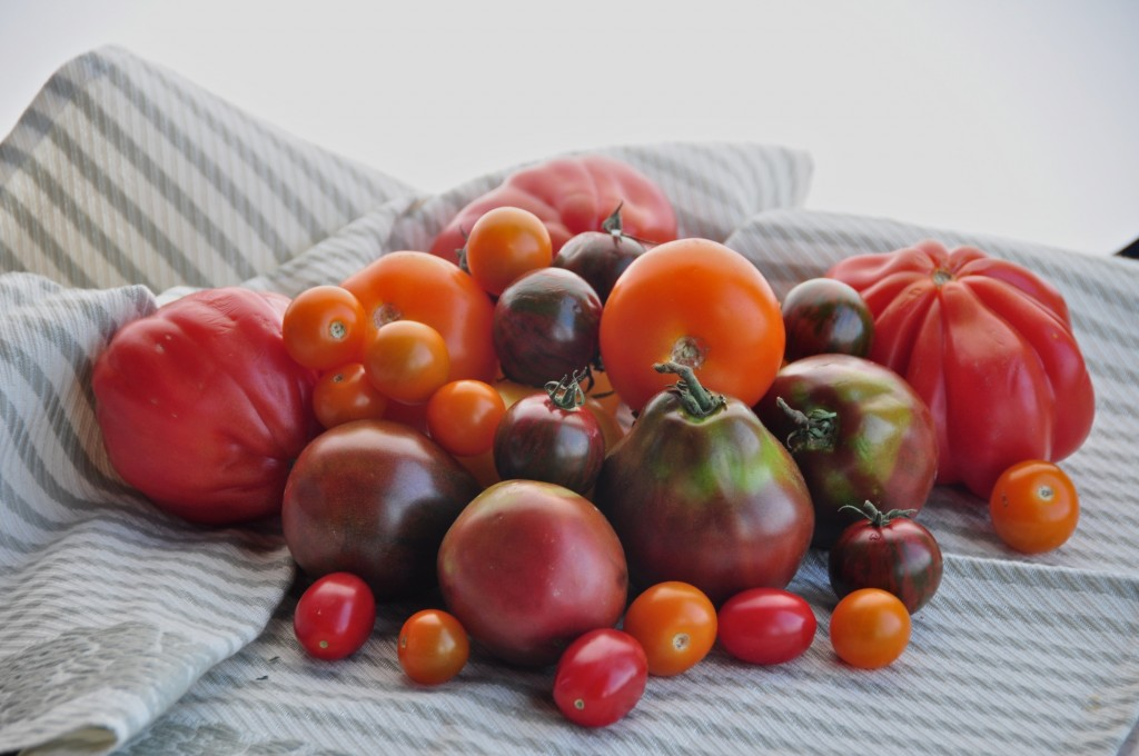 Summer heirloom tomatoes