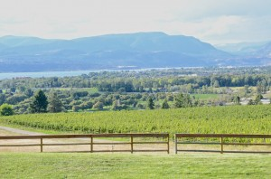 Tantalus Vineyard