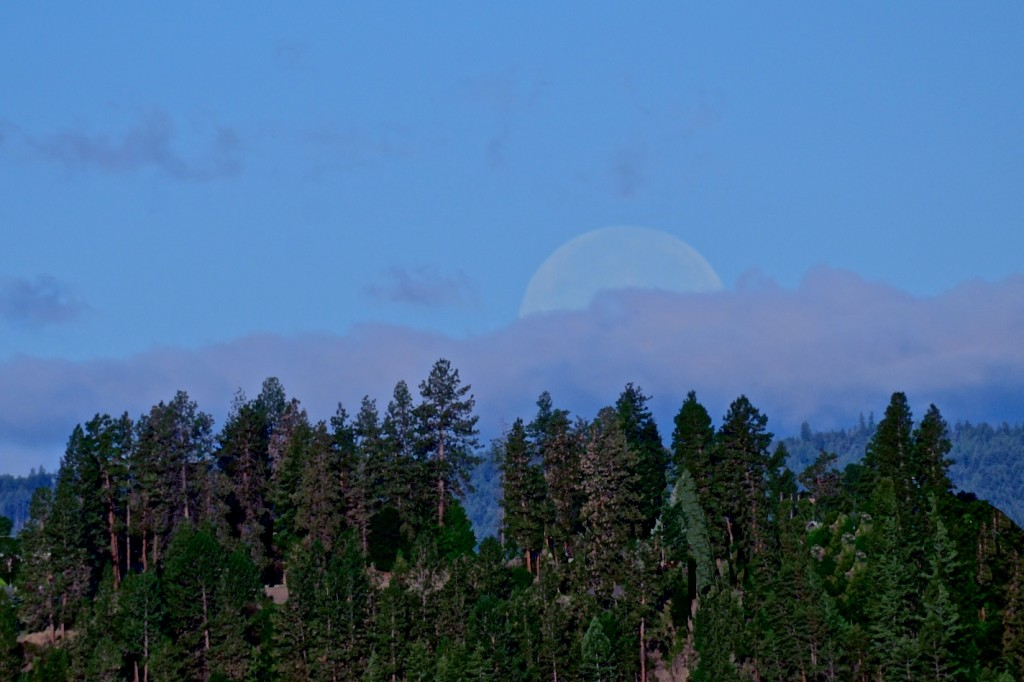 The moon is setting, Okanagan morning