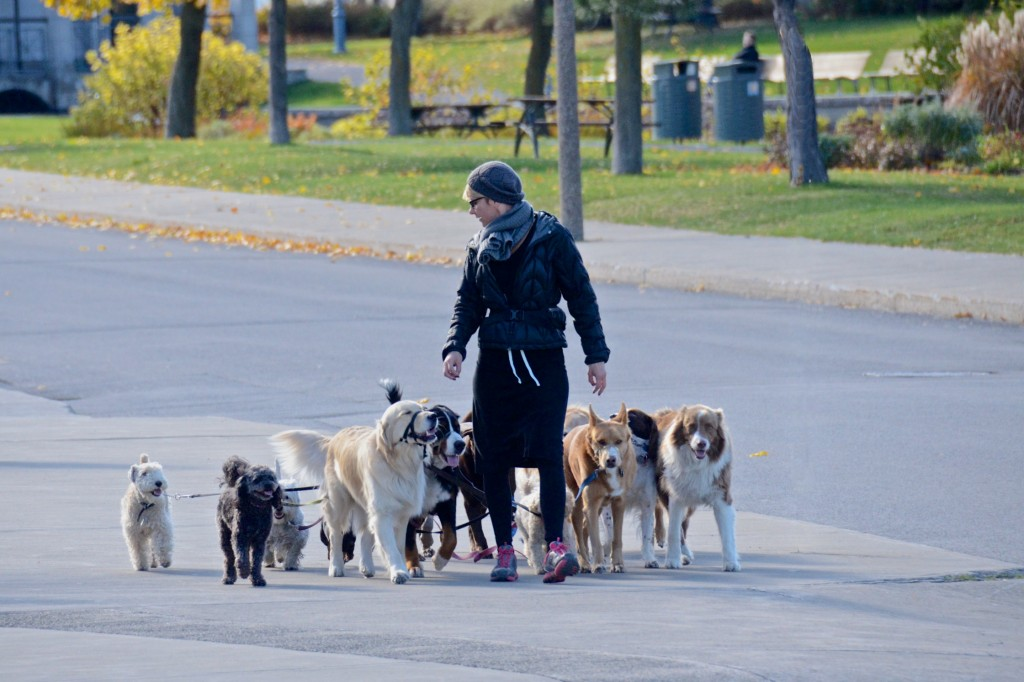 Doggie walker, Montreal