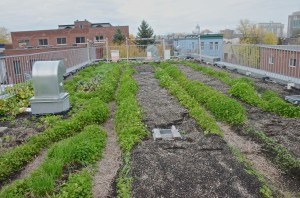 Santropol Roulant: Urban agriculture on the rooftop