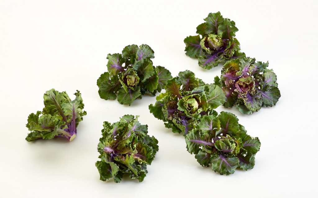 Kalettes (kale and brussels sprouts hybrid by Tozer Seeds
