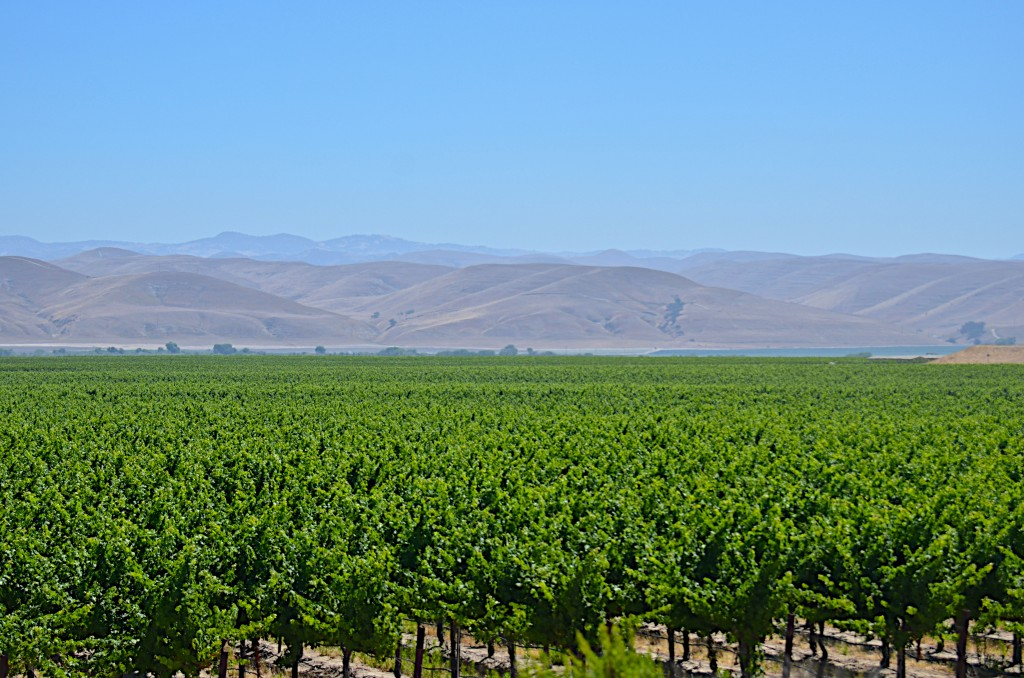 Cass winery vineyard