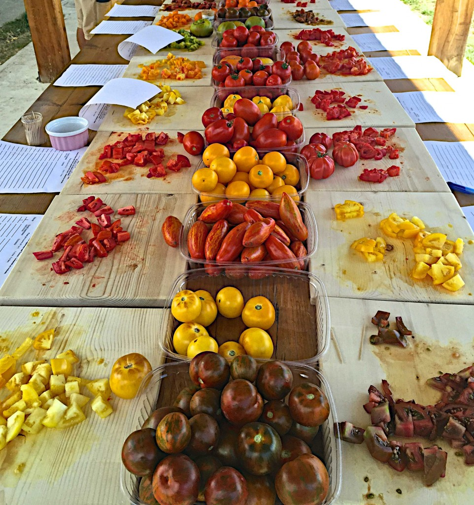 Heirloom tomatoes at Sunshine farm