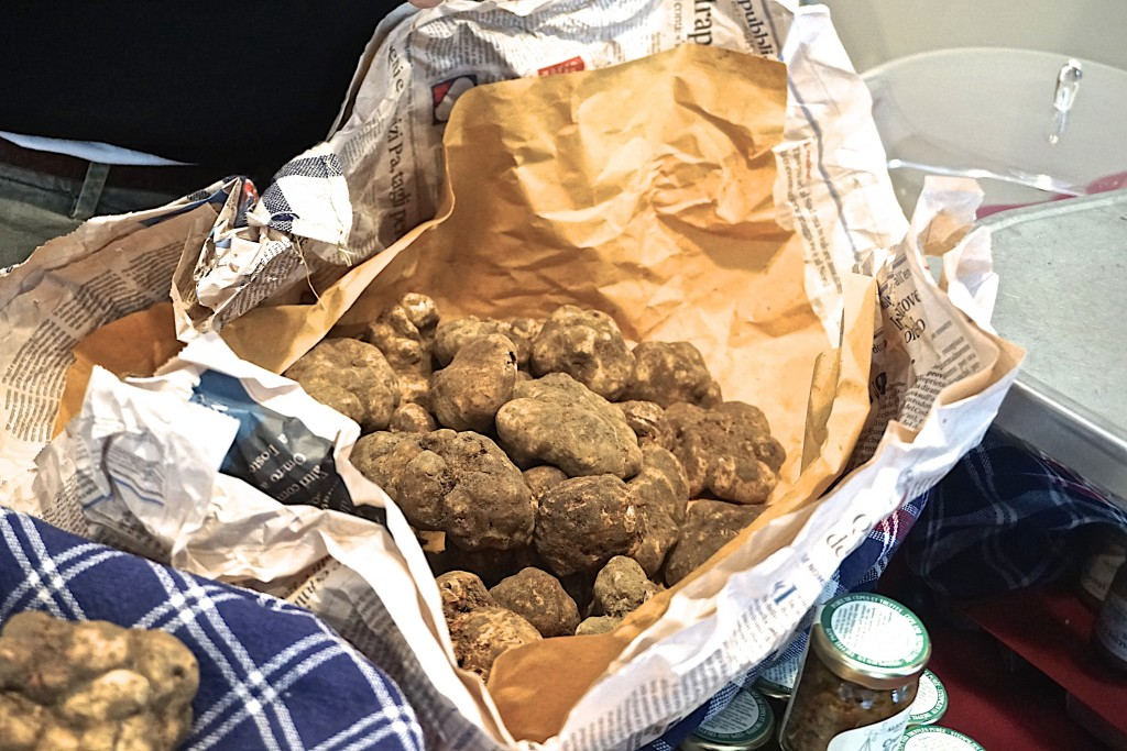 White truffles of San Miniato