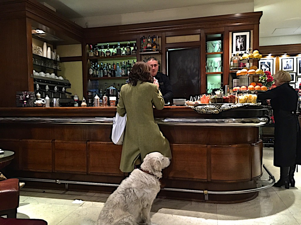 Cafe giacosa roberto cavalli, florence, Aperitivo hour, doggies welcome